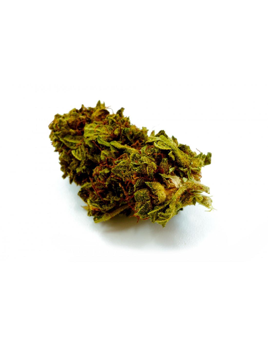 Chocolope kush greenhouse cbd infusion