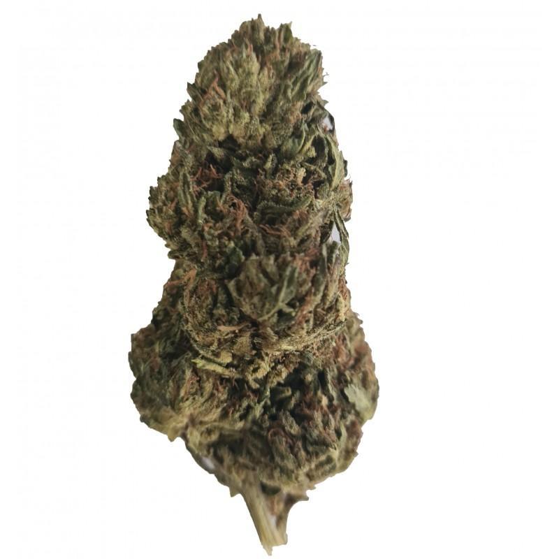 Jamaican dream fleur de cbd